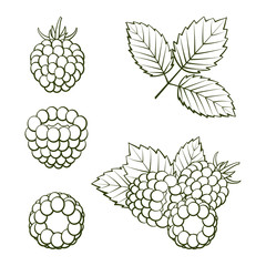 Outline ripe raspberries and blackberries with leaves