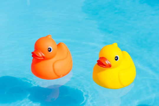 An orange and a yellow rubber duck swimming in the water in a paddling pool