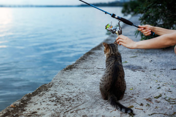 cat and fisherman with fishing rod wheel