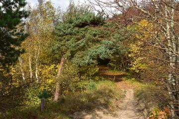 Herbstwald auf der Steilküste der Insel Hiddensee