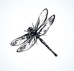 Dragonfly. Vector drawing