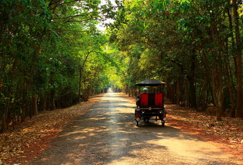 Tourism soft background of driving rickshaw taxi on tropical jungle road around Angkor Wat temple complex in Cambodia