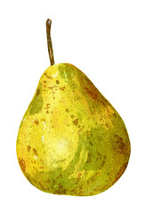 Hand drawn watercolor botanical painting of pear isolated on white background.