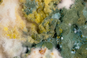 Background of food mold.