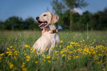Cute Puppy on the flowery meadow