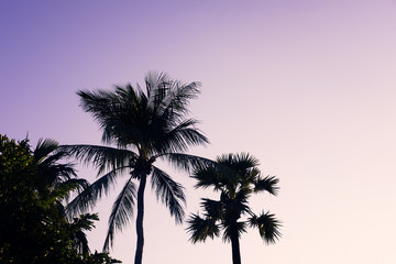 Palm trees silhouette against purple sky. Filter toned effect. Copy space