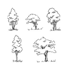 Set of hand drawn architect trees. Vector sketch.Architectural illustration