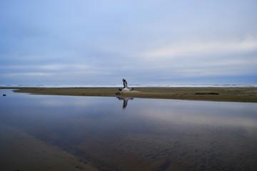 Florence, Oregon - 2018_06.18: Dusk scene on the pacific coast
