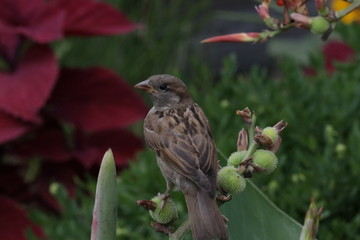Sparrow and Flower