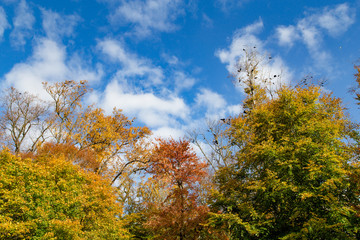 Blue Sky in Autumn