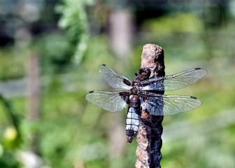 dragonfly sitting on a rod