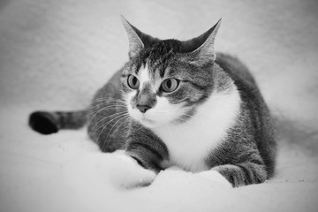 Funny colorful domestic cat with big eyes. Felis sivestris. monochrome photo.