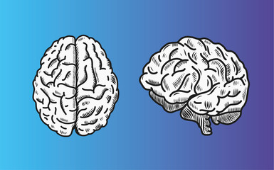 Brain vector illustration in top and front view.