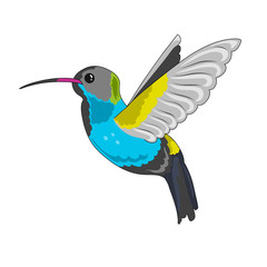humming bird icon