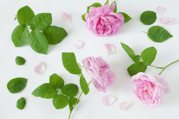 roses, leaves and petals set isolated on white background