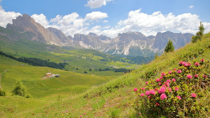 Puez Odle mountain range viewed from a hiking pass leading to Mount Pic (above Raiser Pass) with colorful flowers in the foreground, Val Gardena, Dolomites, Italy