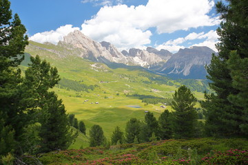 Puez Odle mountain range viewed from a hiking path leading to Mount Pic (above Raiser Pass) with colorful flowers and trees in the foreground, Val Gardena, Dolomites, Italy