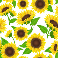 Sunflower seamless pattern with yellow flower, bud and green leaf. Vector illustration background texture for summer and autumn design, isolated on white