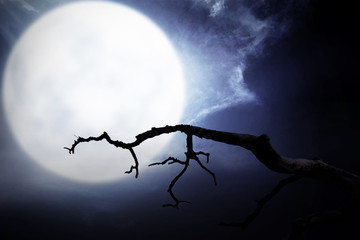 Scary night scene with branch, full moon and dark clouds Fotoväggar