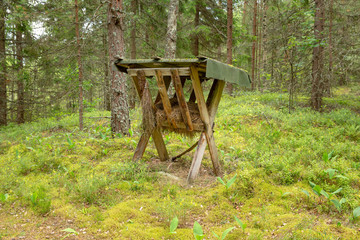 feeding trough for animals in the coniferous forest