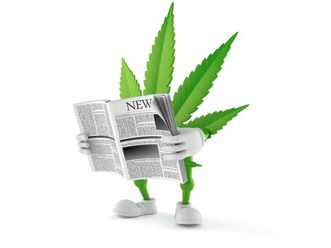 Cannabis character reading newspaper