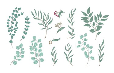 Bundle of elegant detailed drawings of various eucalyptus branches with green leaves. Set of hand drawn natural decorations isolated on white background. Realistic botanical vector illustration.