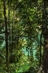 Regenwald im Kao Sok Nationalpark