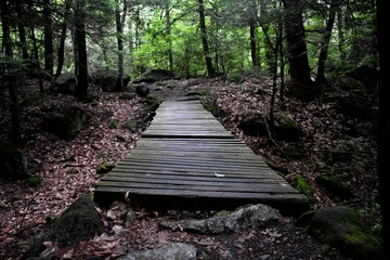 A path to the woods