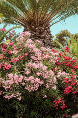nature poster. flowers and palm tree