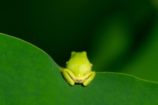 背中越しのカエル