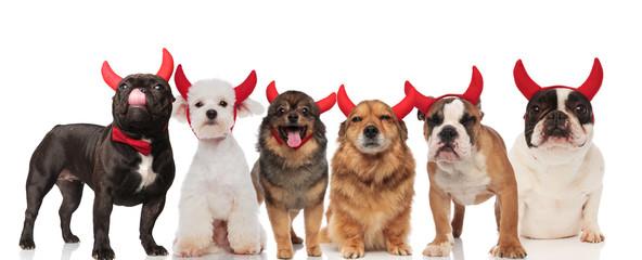 six cute dogs wearing devil horns for halloween