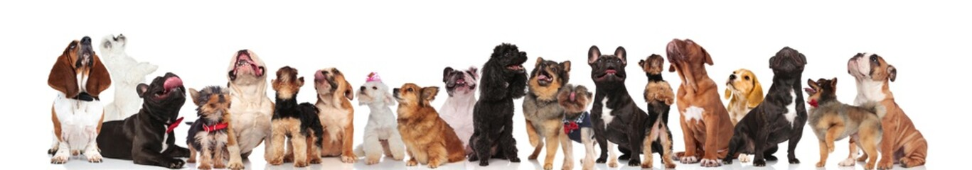large group of happy curious dogs looking up