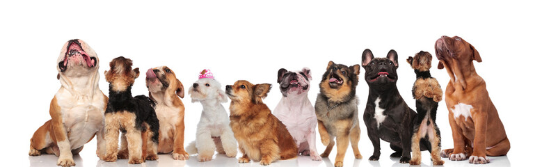 different breeds of curious dogs looking up and panting