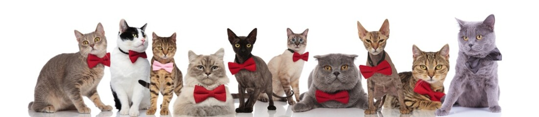large team of gentleman cats with bowties