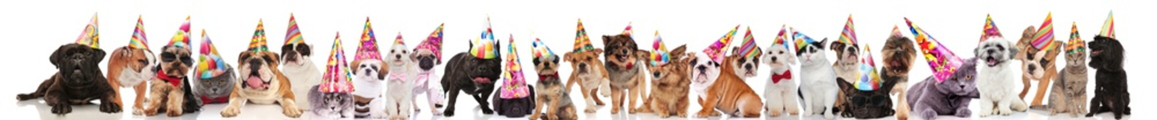 large group of happy pets wearing colorful birthday hats