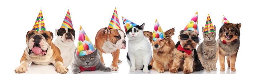 many funny pets of different breeds wearing birthday hats