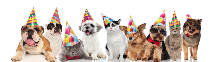cute group of mixed birthday pets with colorful birthday caps