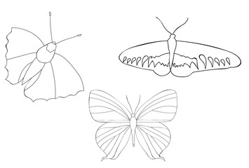 vector, isolated, butterfly sketch