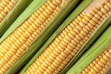 Fresh corn on cobs.
