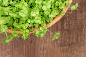 Overhead photo of fresh green parsley in pot with copy space