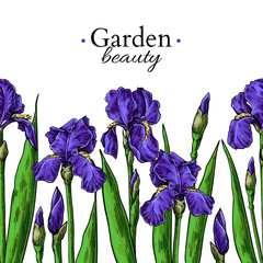Iris flower and leaves border drawing. Vector hand drawn floral seamless pattern.