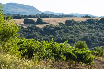 Vineyards in Somontano region in Spain