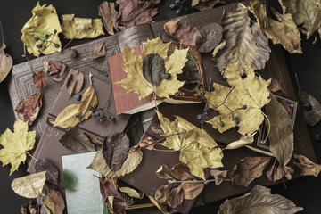 Several of different books under dry leaves of different trees, top view, vintage background. Concept of reading, back to school, education, autumn