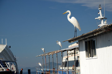 White herons over the boat roof