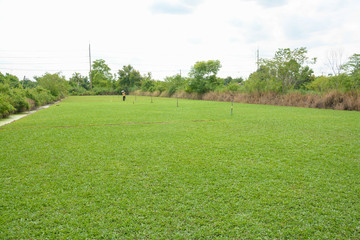 green grass feilds at park to be sold commercially