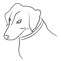 Black and white sketch of dog, vector illustration