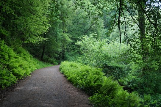 Green forest natural walkway in Edenvale, County Wexford, Ireland