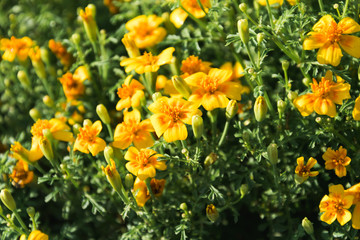 yellow flowers on a green background