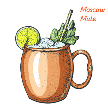 Moscow Mule cocktail illustration. Alcoholic cocktails hand drawn vector illustration.