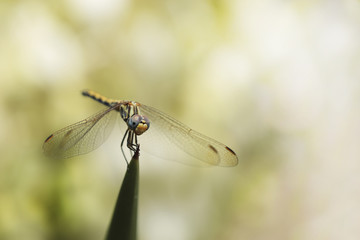 Dragonfly on the background bokeh
